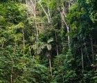 Peru accupies postion 7 on the list of countries with the largest deforestation in the world in 2018