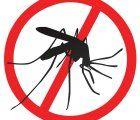 Dengue fever transmitting mosquitos found throughout Lima